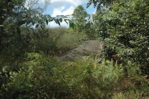 Wo früher einmal Vorstadt war, nimmt nun der Dschungel wieder die Zügel in die Hand